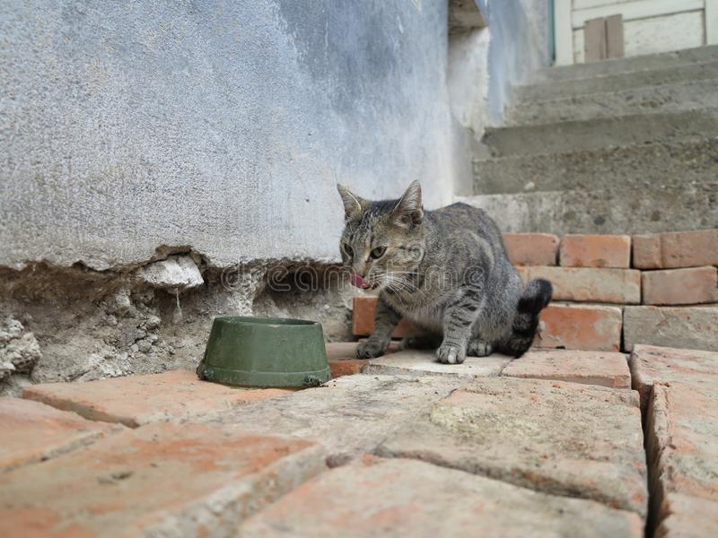 Cat eating its dinner on the old cottage. With tongue out from its mouth royalty free stock images
