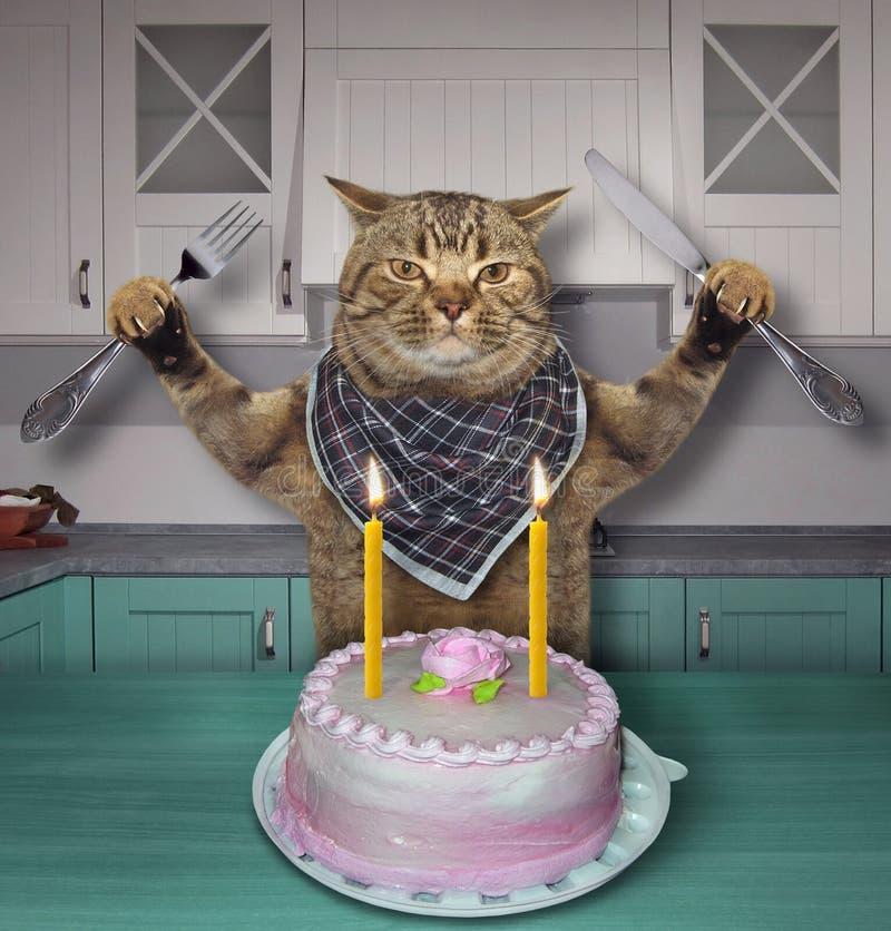 Cat eats the birthday cake stock photo
