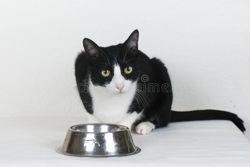 Download Cat with empty food bowl stock photo. Image of eating - 20394450