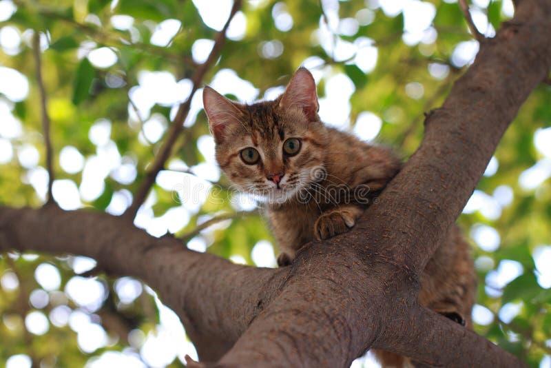 CAT EN ÁRBOL fotografía de archivo