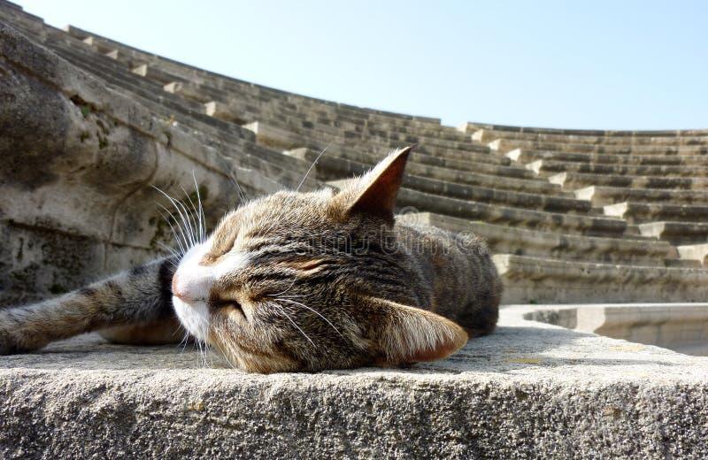 Cat Enjoying perdida durmiente el Sun en un Amphitheatre imágenes de archivo libres de regalías