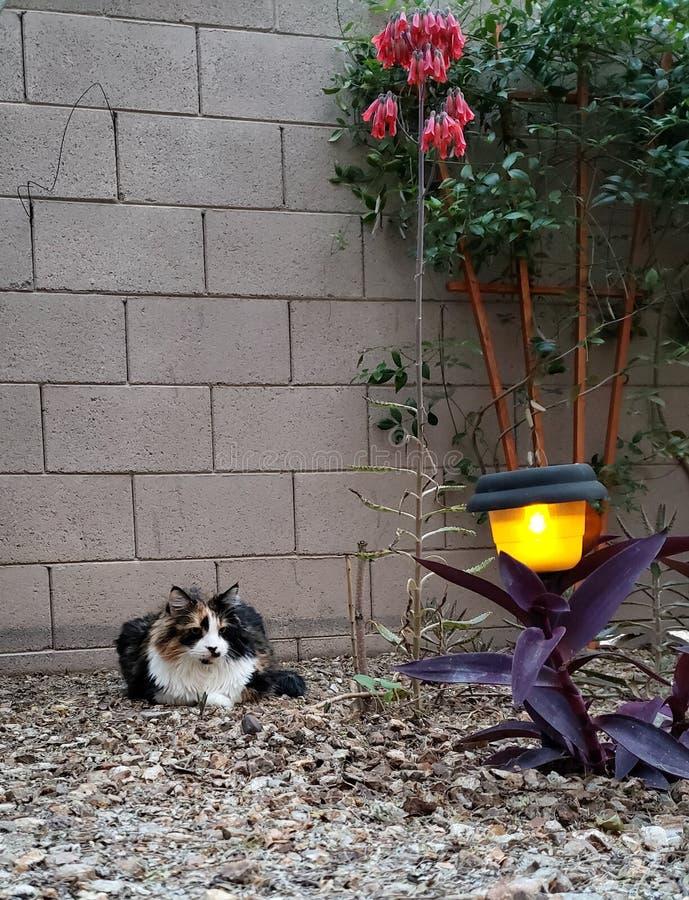 Cat Enjoying Spring Evening royalty free stock photo