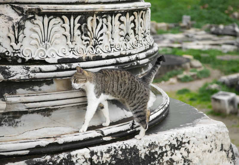 Download Cat In Ephesus Stock Image - Image: 34870641