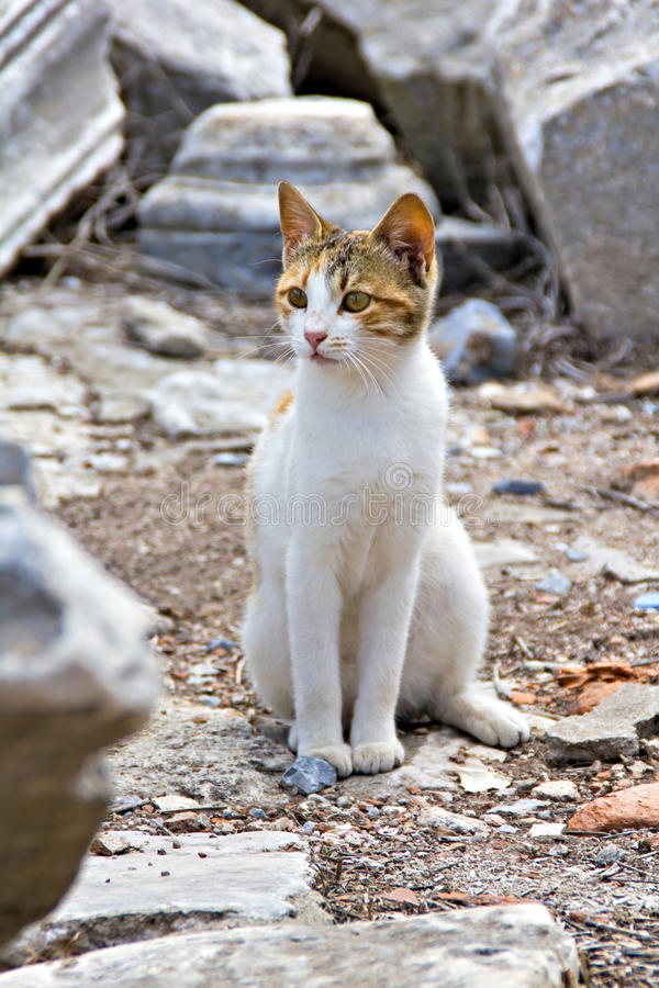 Cat At Ephesus Ruins Stock Photography