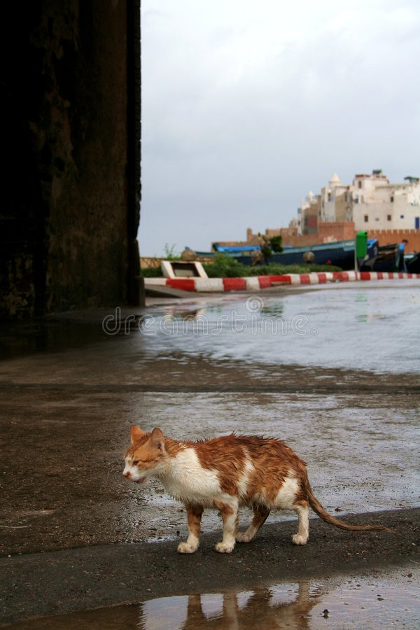Cat from Essaouira. View at the walking cat and bastion in Essaouira royalty free stock image