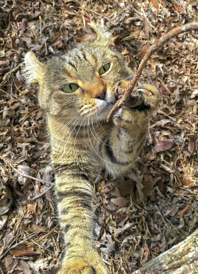 Cat Exploring Outdoors stock image
