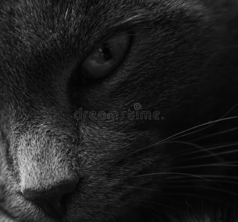 Cat Eye foto de stock