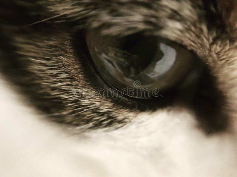 Cat Eye immagini stock libere da diritti