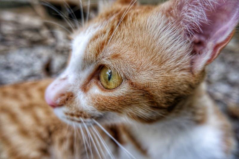 Cat Eye stock foto's