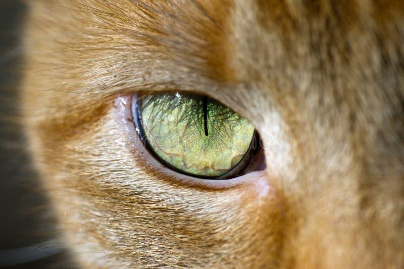 Download Cat Eye Royalty Free Stock Image - Image: 23205696