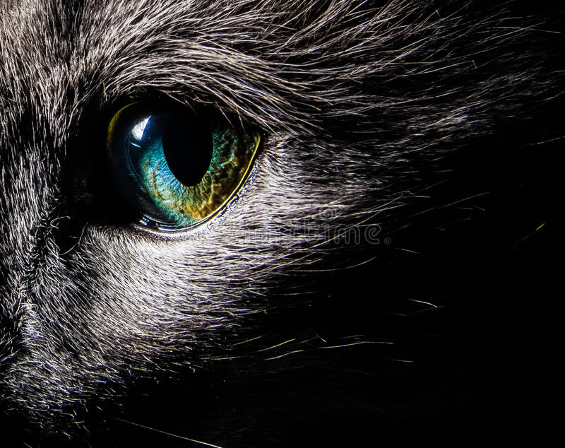 Cat Eye foto de stock royalty free