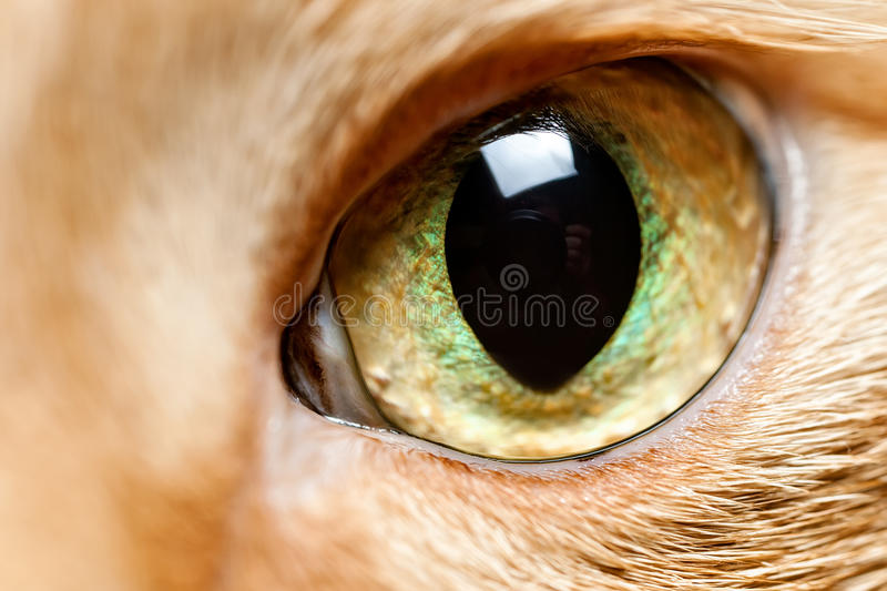 Cat eye close up stock photos
