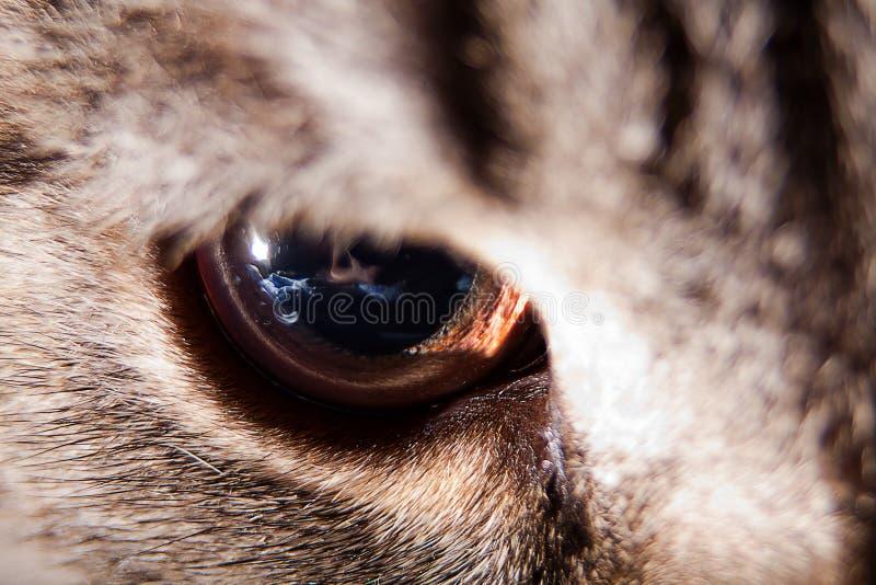 Download Cat Eye Closeup Royalty Free Stock Image - Image: 26619416