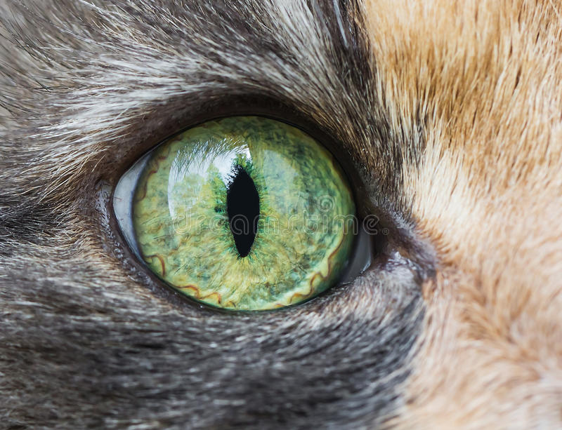 Cat eye royalty free stock image