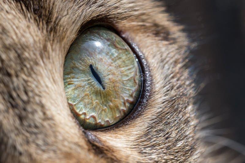 Cat eye macro. Yellow cat eye closeup macro stock image