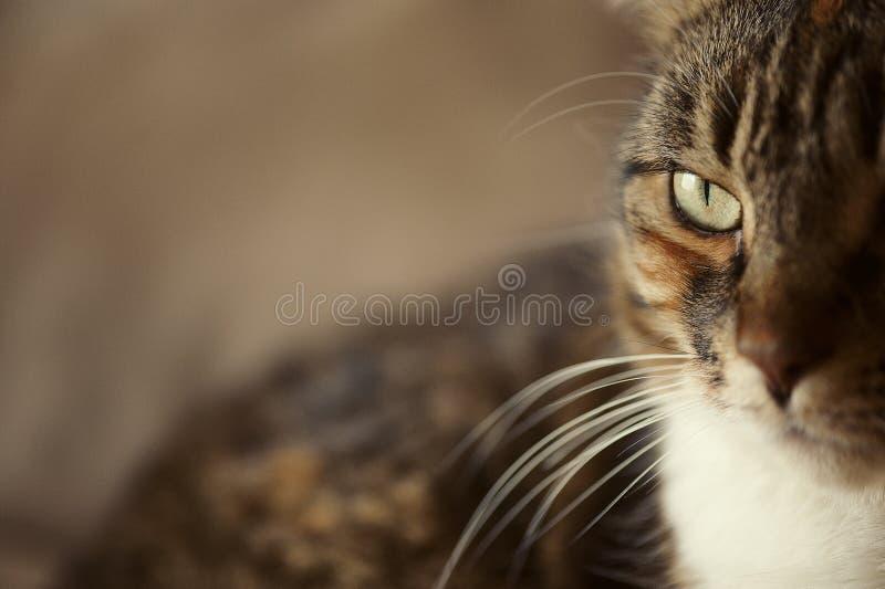 Cat Eye Side View stockfoto