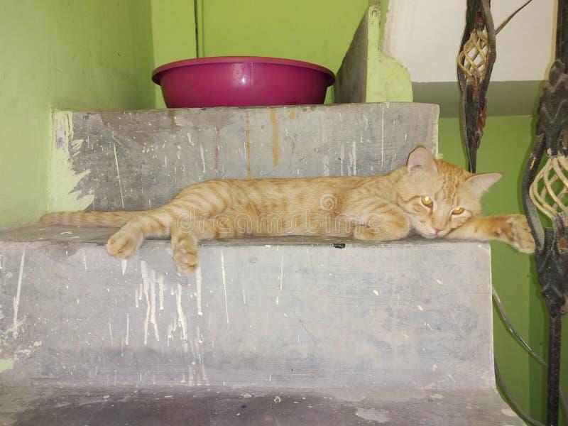 Cat Eye royalty-vrije stock afbeeldingen