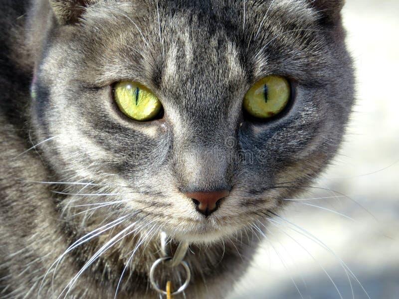 Cat Eyes fotos de archivo libres de regalías