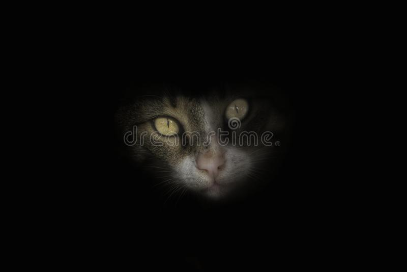 Cat Eyes royalty-vrije stock foto