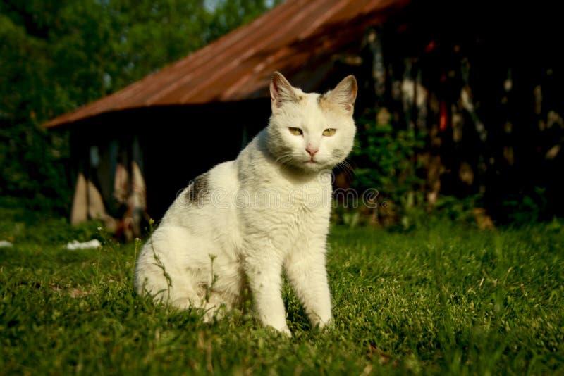 Cat Eyes stockfotografie