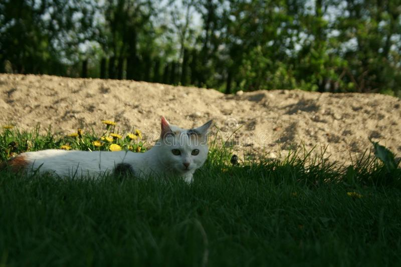 Cat Eyes lizenzfreie stockfotografie