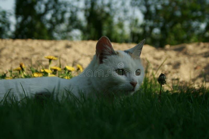 Cat Eyes lizenzfreie stockfotos