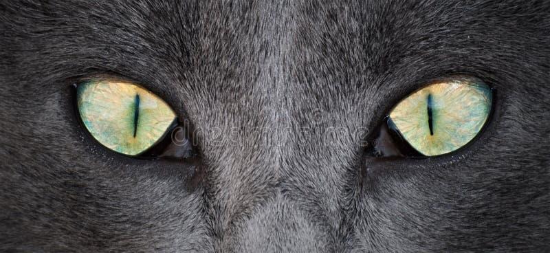 Download Cat Eyes stock photo. Image of ideas, head, black, design - 28673470