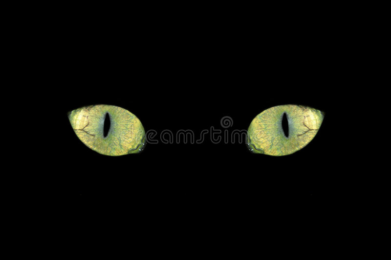 Cat eyes. Mystik cat eyes in yellow royalty free stock photos