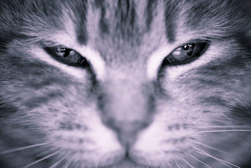 Cat eyes stock image