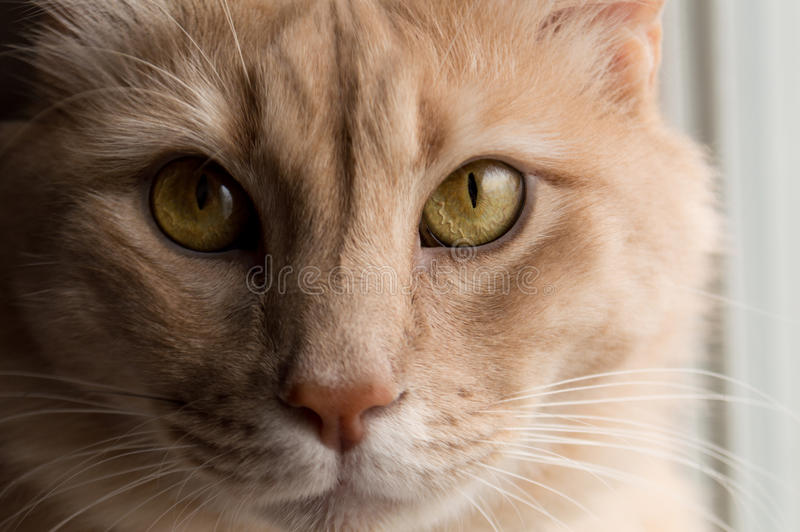 Cat Eyes lizenzfreies stockfoto