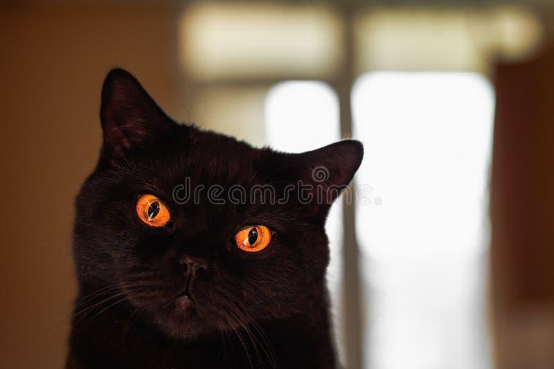 Cat Eyes stockfotos