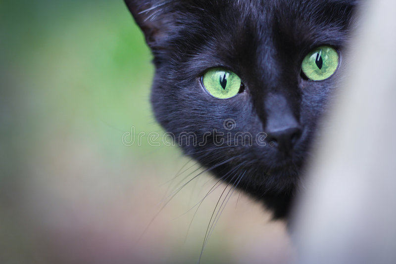 Cat Eyes. A black domestic short hair cat with green eyes looks at the camera stock photos