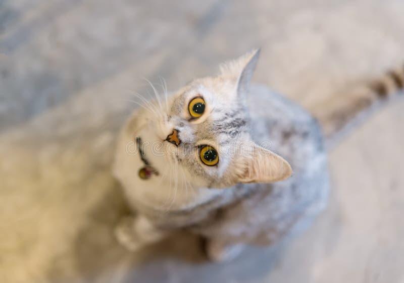 Cat Eyes stock foto