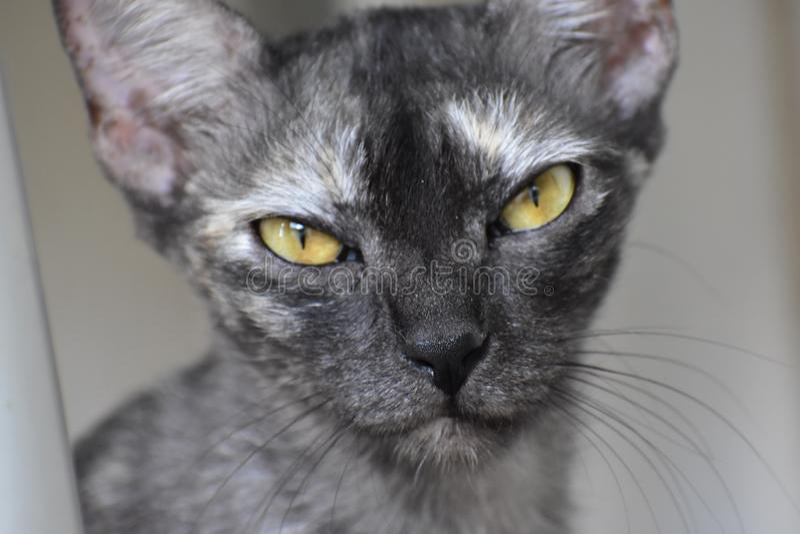 Cat Eyes stock foto's
