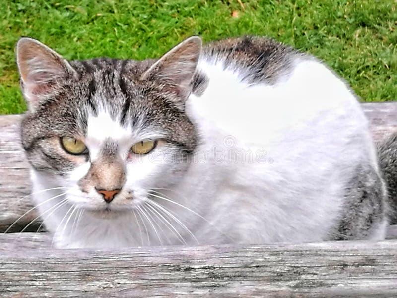 Cat Eyes stockbilder