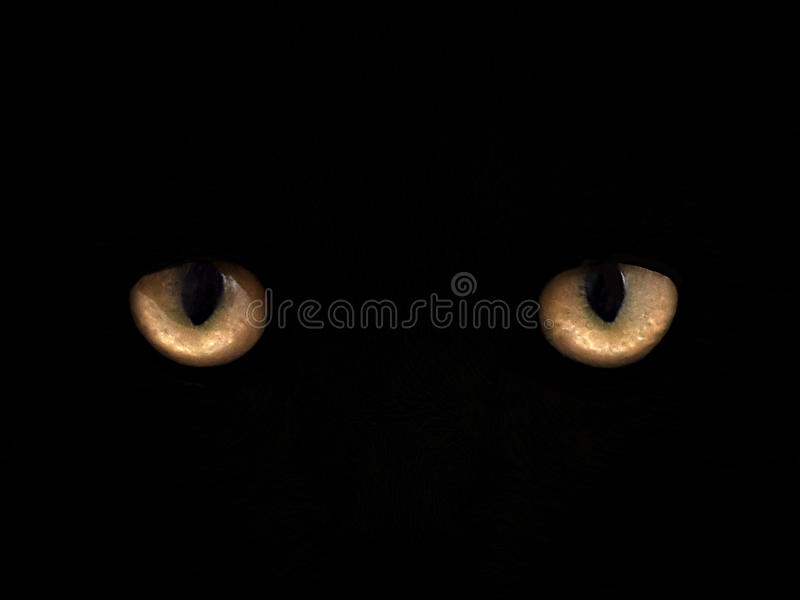 Cat eyes on a black background close-up. front view stock photography