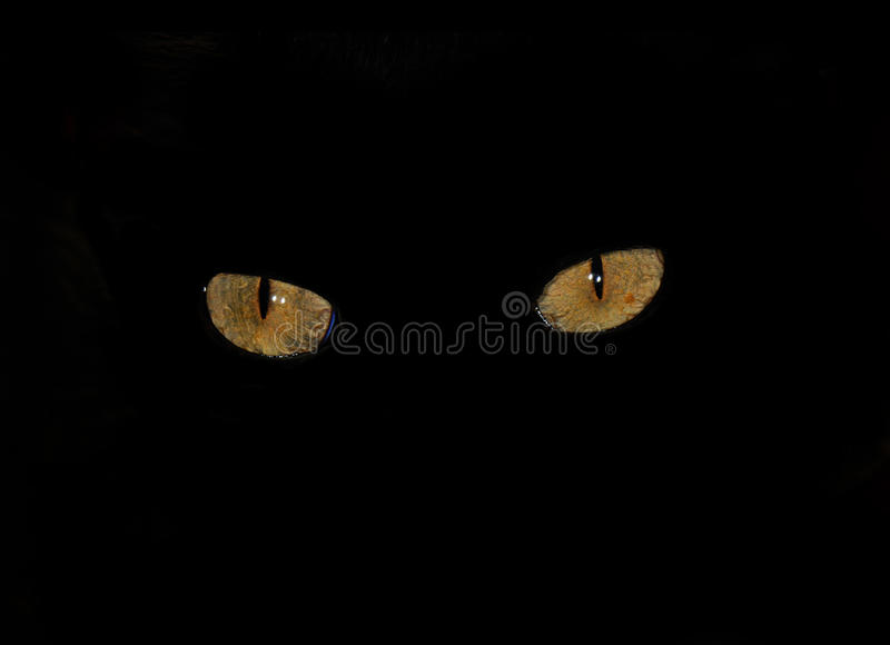 Cat eyes in the dark. Detail of two cat eyes isolated on black background stock photography