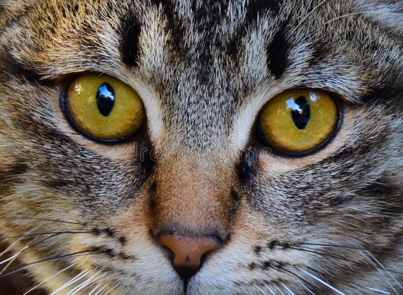 Cat eyes. Expressive eyes of cat royalty free stock photo