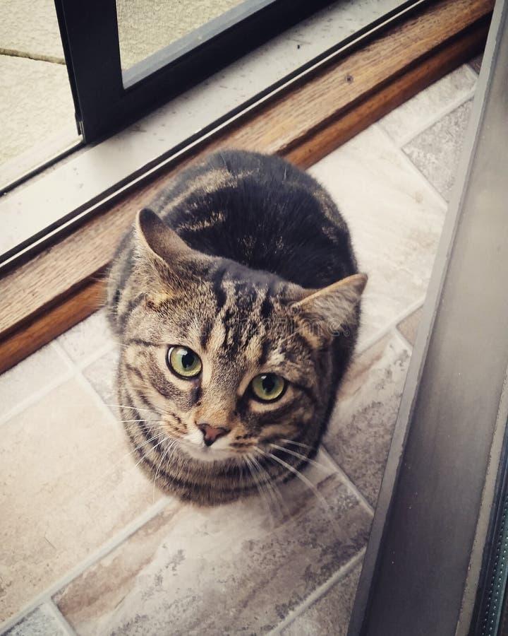 Cat Eyes sveglia fotografie stock libere da diritti