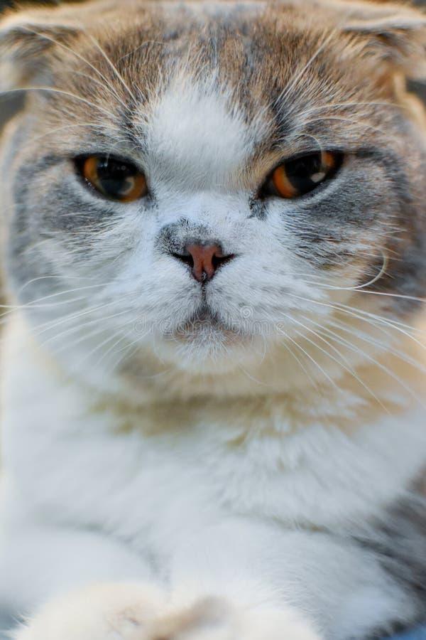 Cat Face stockfotografie