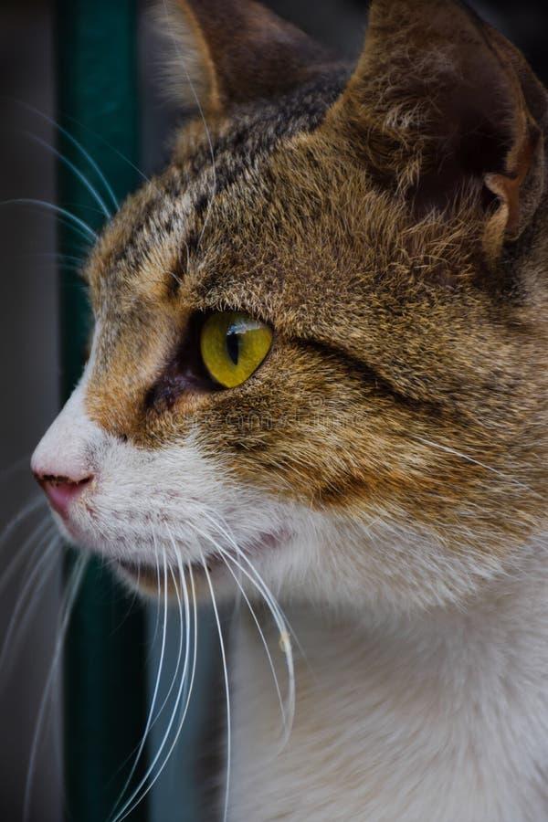 Cat Face fotos de stock
