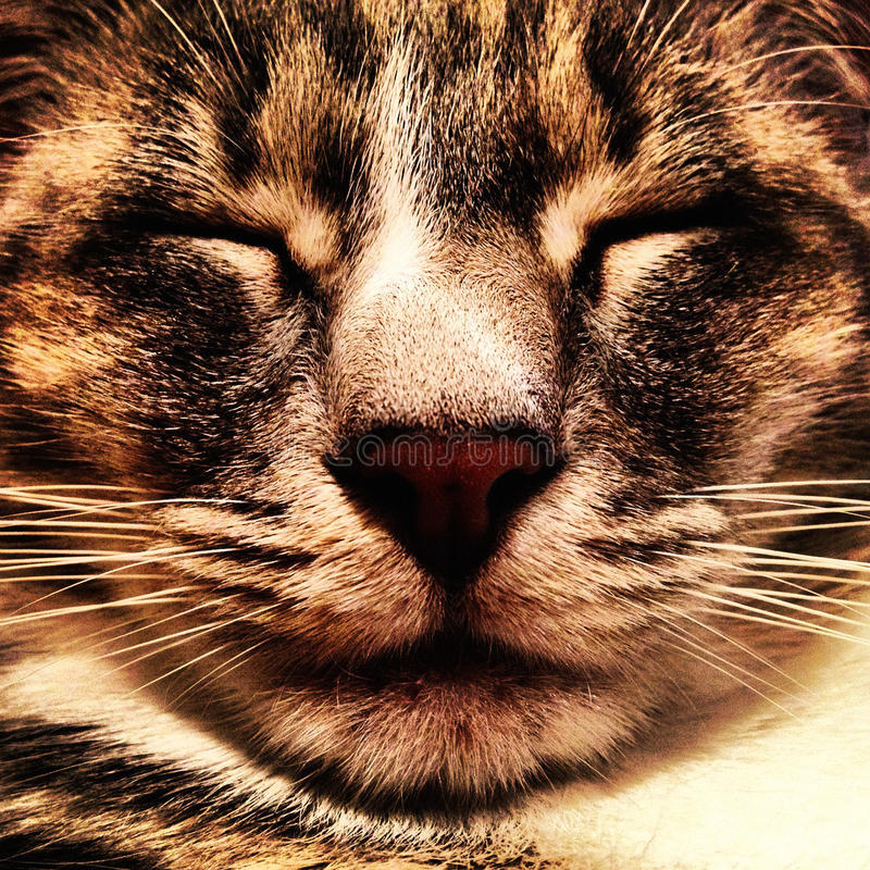 Download Cat Face Stock Photography - Image: 29527762
