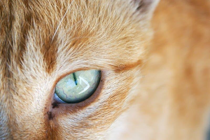 Cat Face stockfotos