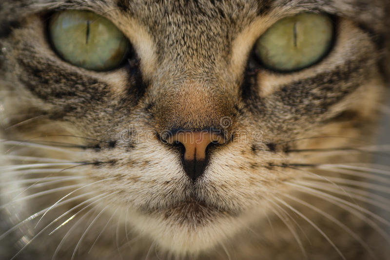 Cat Face foto de archivo