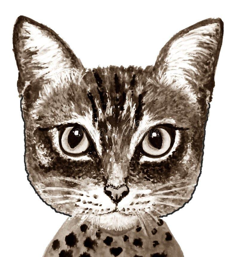 Cat Face royalty-vrije stock fotografie