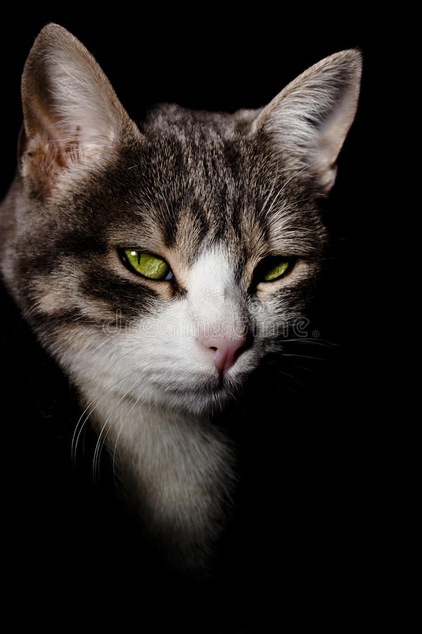 Download Cat face on black shadows stock image. Image of feline - 28925129