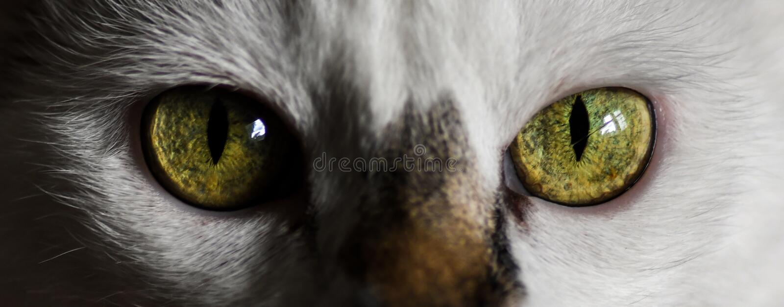 Cat, Face, Eye, Whiskers stock photos