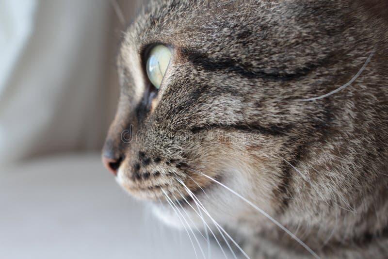 Cat Face Silhouette fotos de archivo libres de regalías