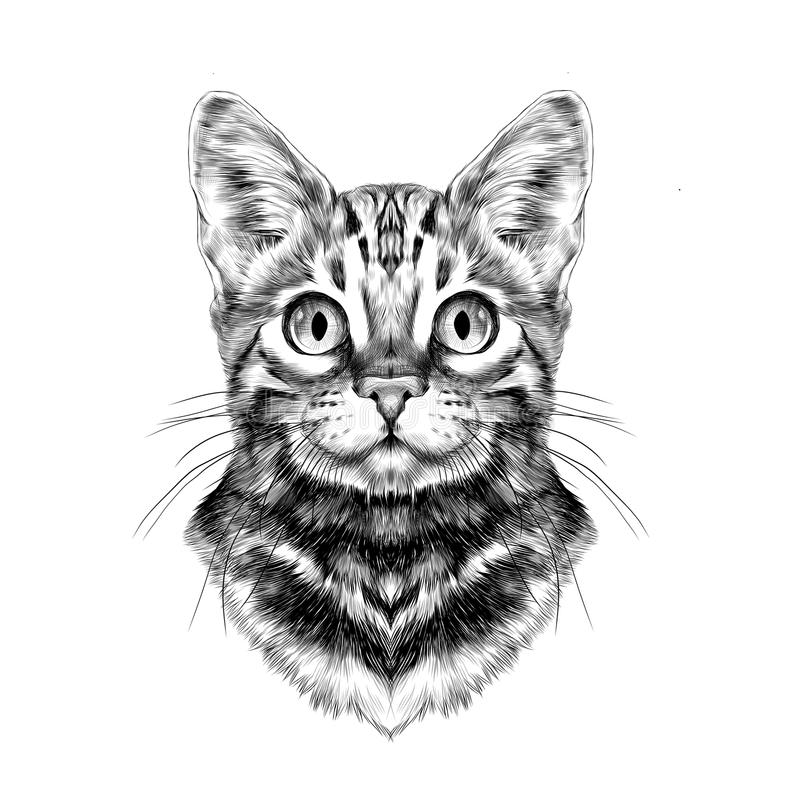 Free Cat Face Sketch Vector Royalty Free Stock Photo - 91503185