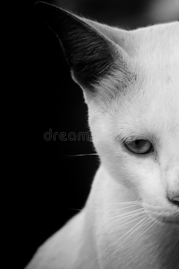 Cat, Face, White, Black stock photo